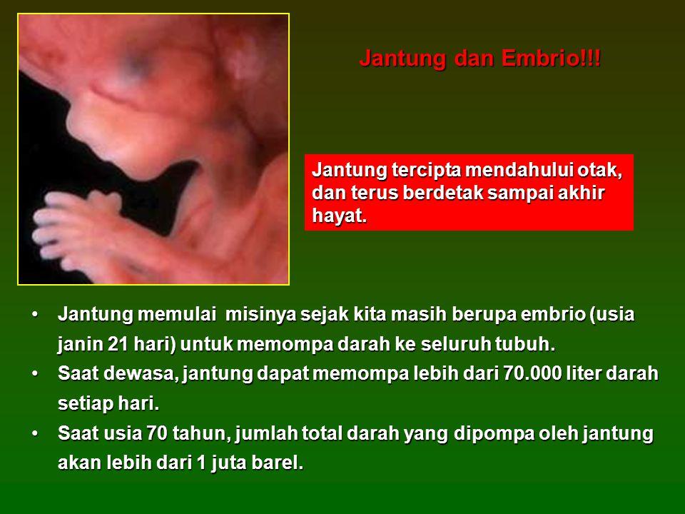 Jantung dan Embrio!!! Jantung tercipta mendahului otak, dan terus berdetak sampai akhir hayat.