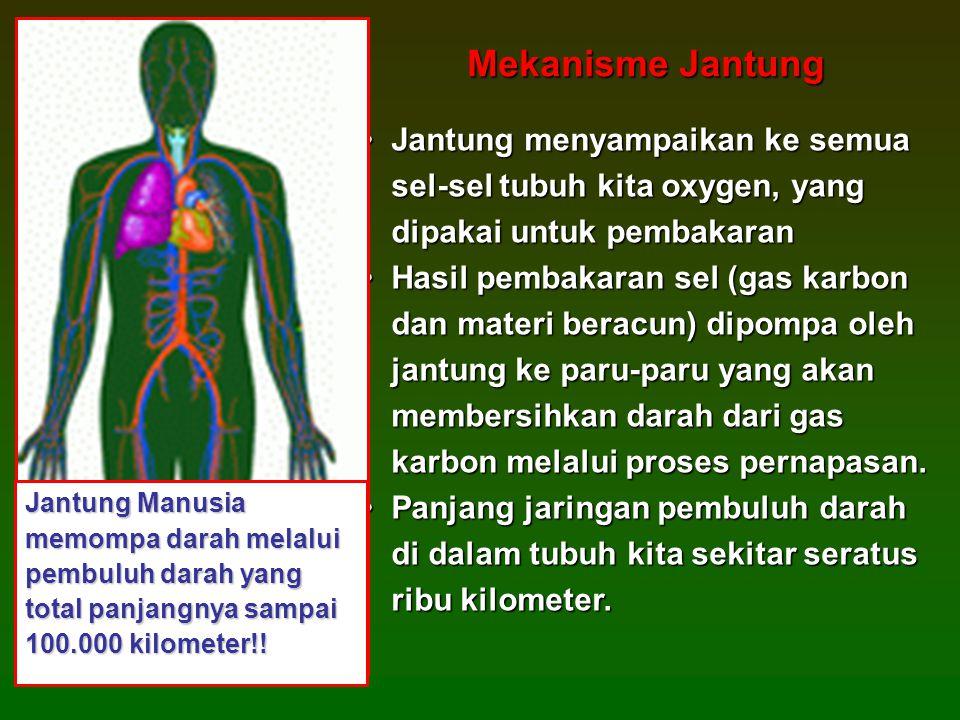 Mekanisme Jantung Jantung menyampaikan ke semua sel-sel tubuh kita oxygen, yang dipakai untuk pembakaran.