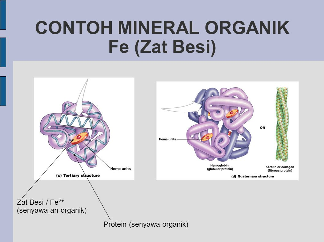 CONTOH MINERAL ORGANIK Fe (Zat Besi)