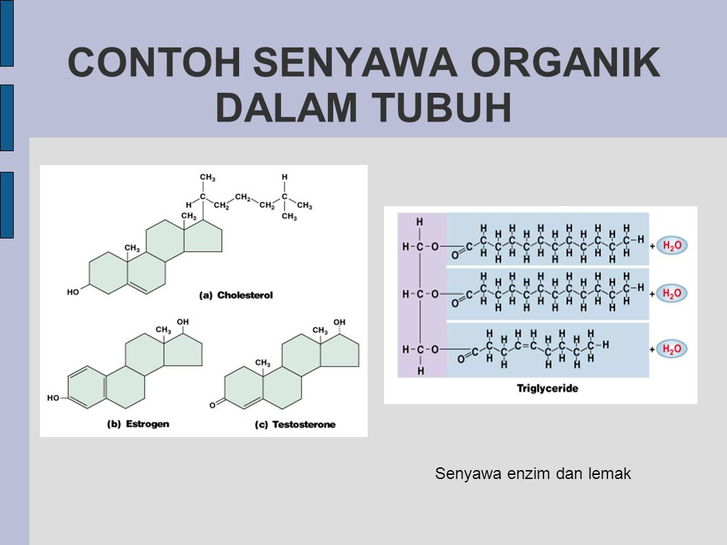 CONTOH SENYAWA ORGANIK DALAM TUBUH