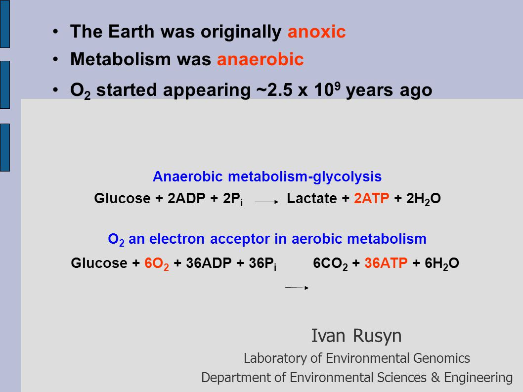 The Earth was originally anoxic Metabolism was anaerobic