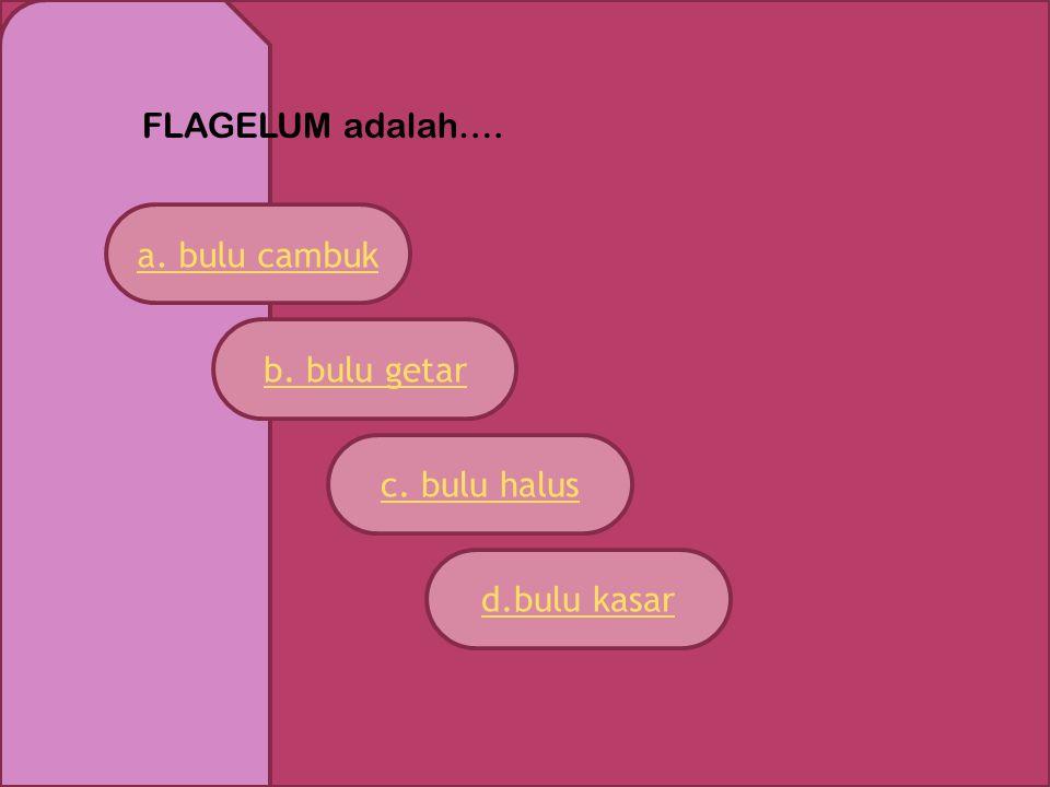 FLAGELUM adalah…. a. bulu cambuk b. bulu getar c. bulu halus d.bulu kasar