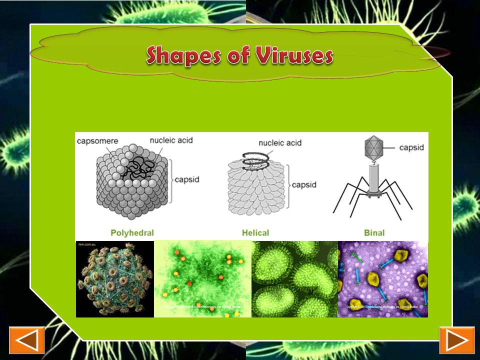 Shapes of Viruses