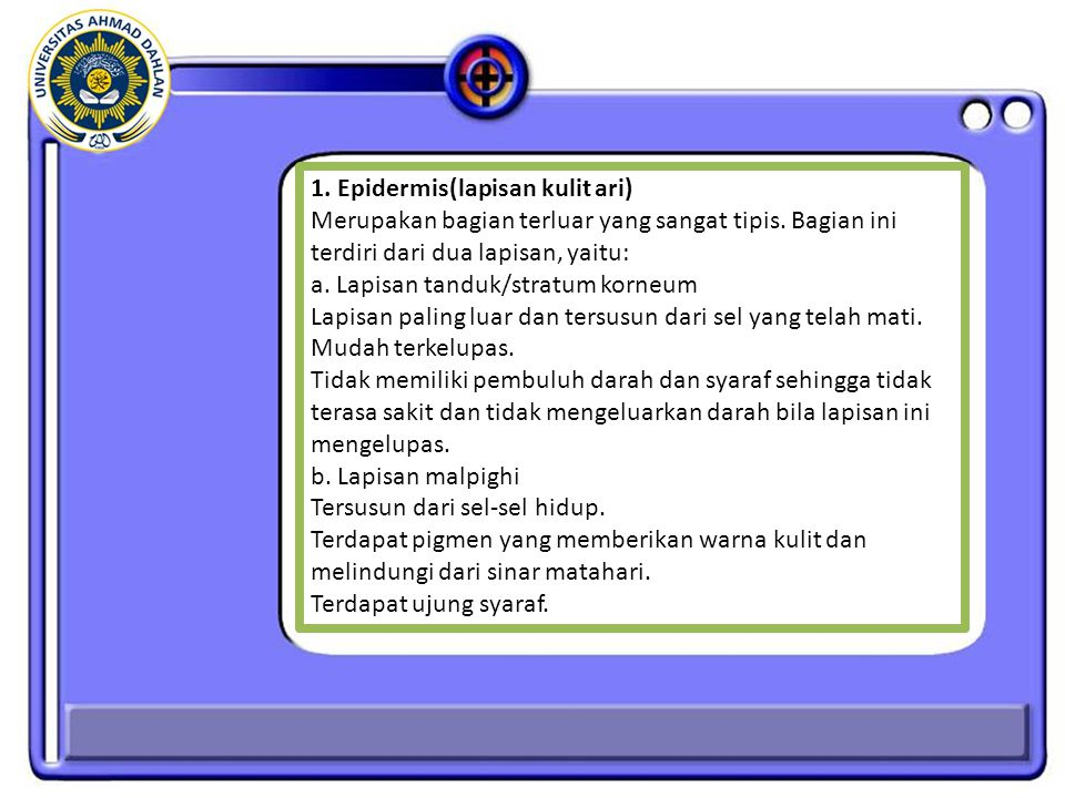 1. Epidermis(lapisan kulit ari)