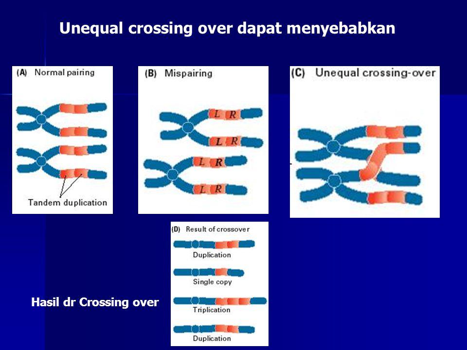 Unequal crossing over dapat menyebabkan