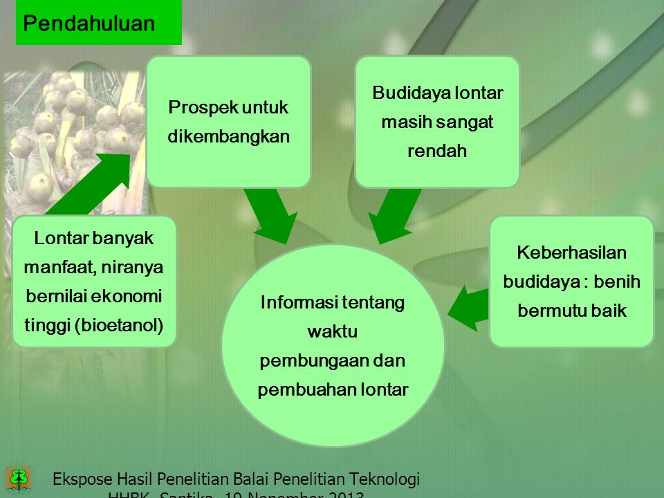 Pendahuluan Informasi tentang waktu pembungaan dan pembuahan lontar. Lontar banyak manfaat, niranya bernilai ekonomi tinggi (bioetanol)