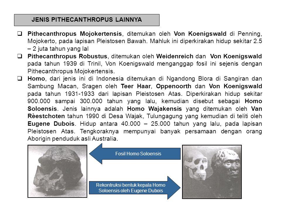 JENIS PITHECANTHROPUS LAINNYA