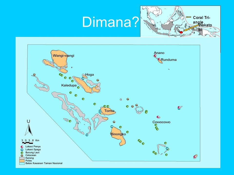 Dimana Wakatobi Coral Tri-angle