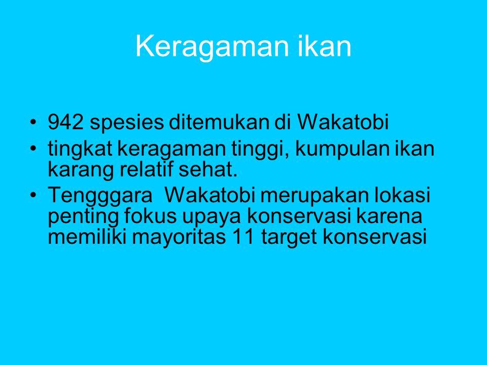 Keragaman ikan 942 spesies ditemukan di Wakatobi