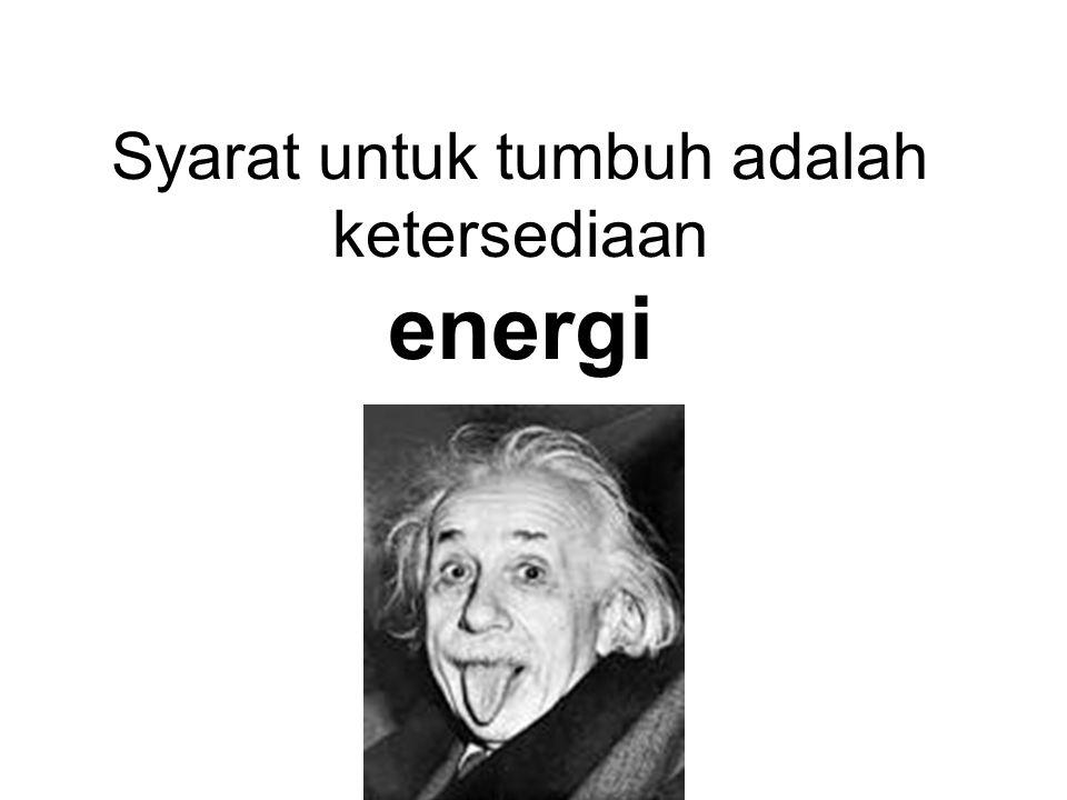 Syarat untuk tumbuh adalah ketersediaan energi