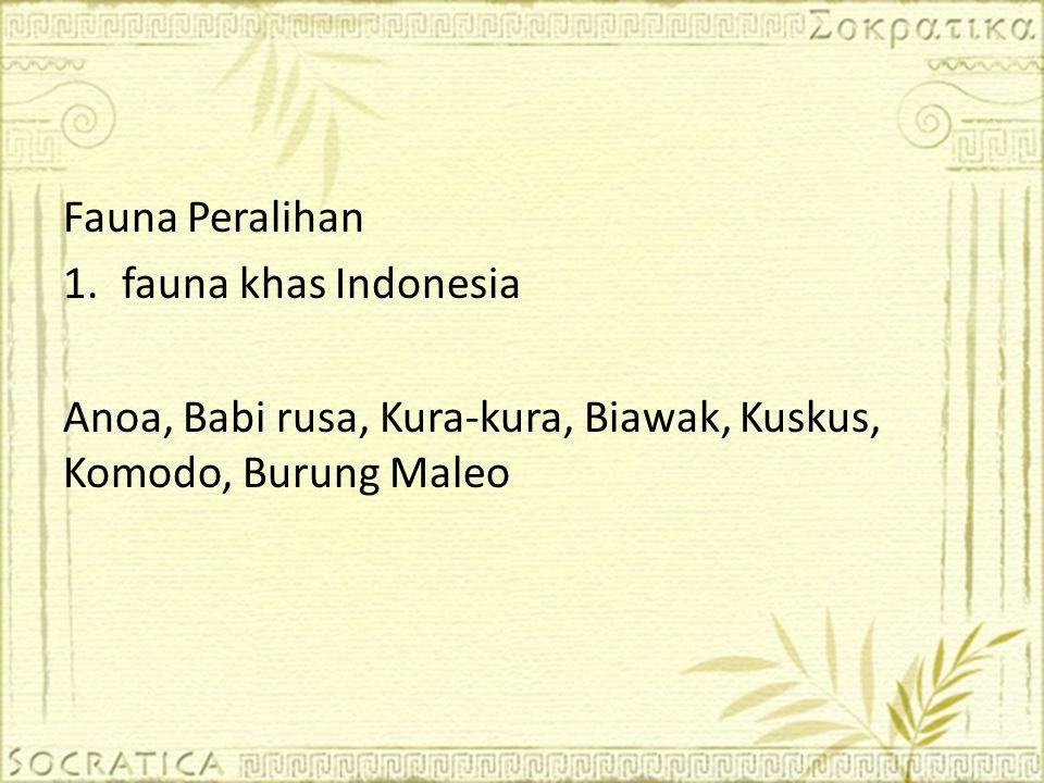 Fauna Peralihan fauna khas Indonesia.