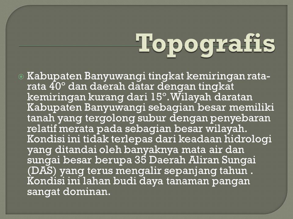 Topografis