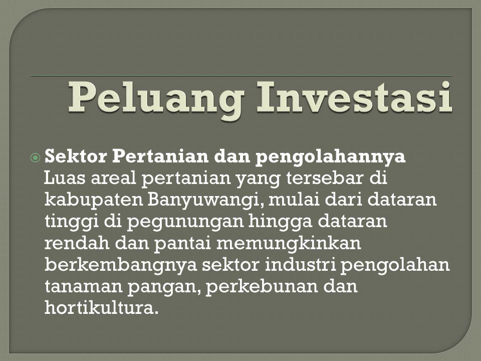 Peluang Investasi Sektor Pertanian dan pengolahannya