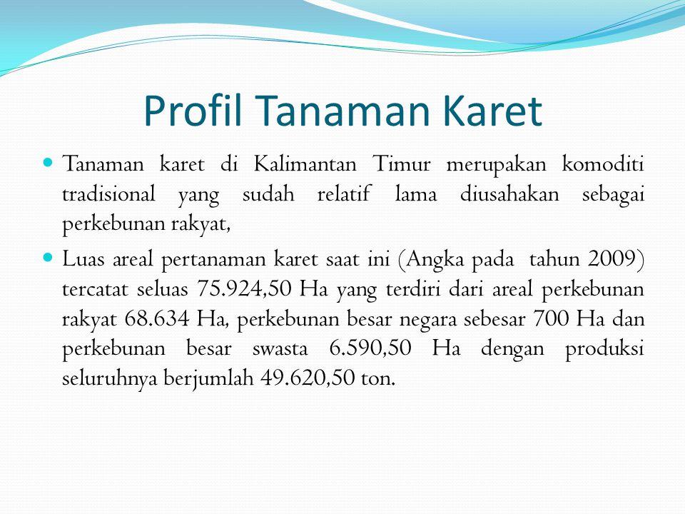 Profil Tanaman Karet Tanaman karet di Kalimantan Timur merupakan komoditi tradisional yang sudah relatif lama diusahakan sebagai perkebunan rakyat,