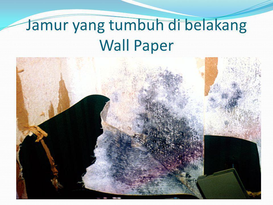 Jamur yang tumbuh di belakang Wall Paper
