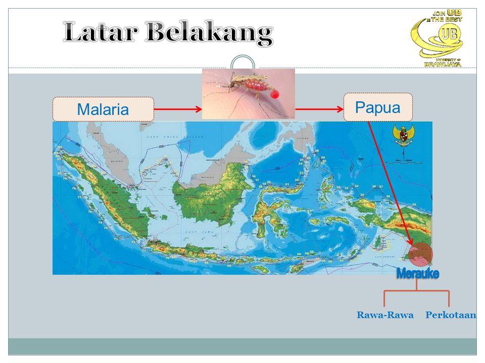 Latar Belakang Papua Malaria Merauke Rawa-Rawa Perkotaan