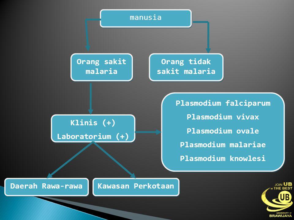 Orang tidak sakit malaria Plasmodium falciparum