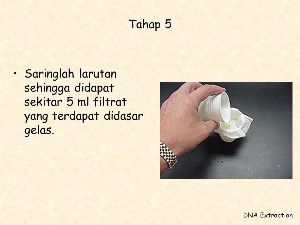 Tahap 5 Saringlah larutan sehingga didapat sekitar 5 ml filtrat yang terdapat didasar gelas.