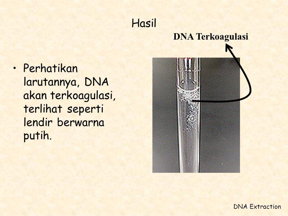 Hasil DNA Terkoagulasi. Perhatikan larutannya, DNA akan terkoagulasi, terlihat seperti lendir berwarna putih.