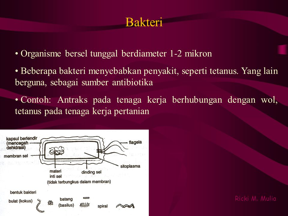 Bakteri Organisme bersel tunggal berdiameter 1-2 mikron