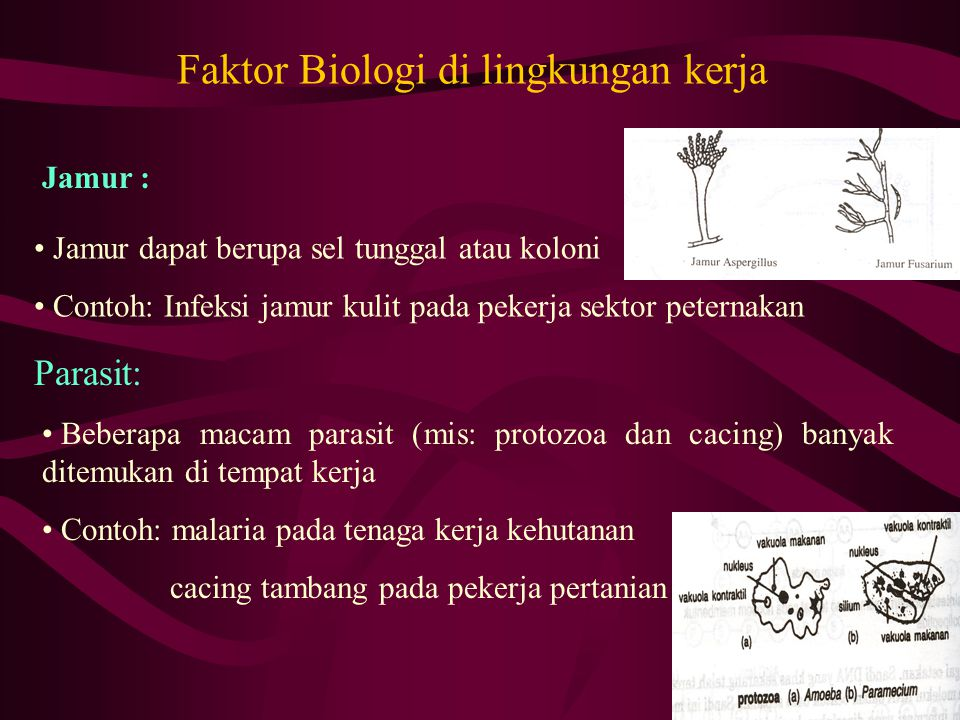 Faktor Biologi di lingkungan kerja
