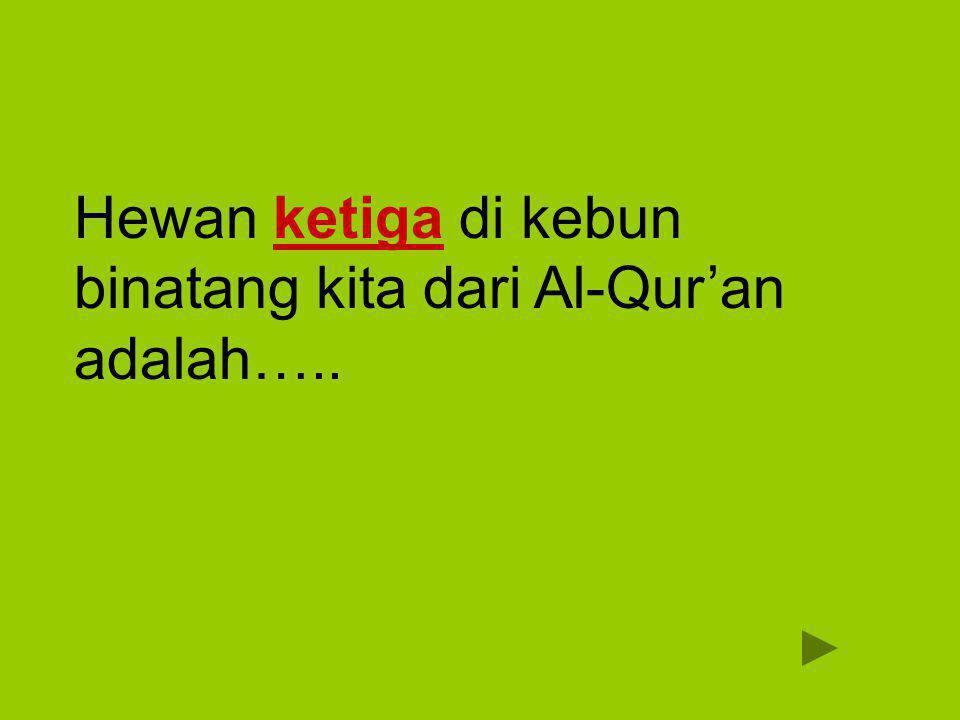 Hewan ketiga di kebun binatang kita dari Al-Qur'an adalah…..