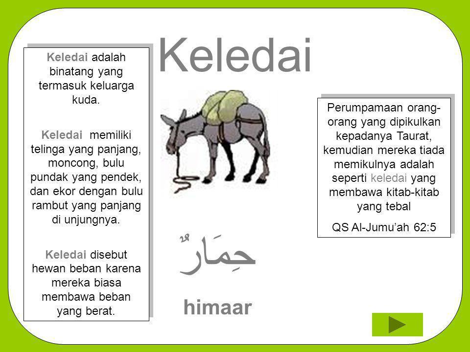 Keledai adalah binatang yang termasuk keluarga kuda.