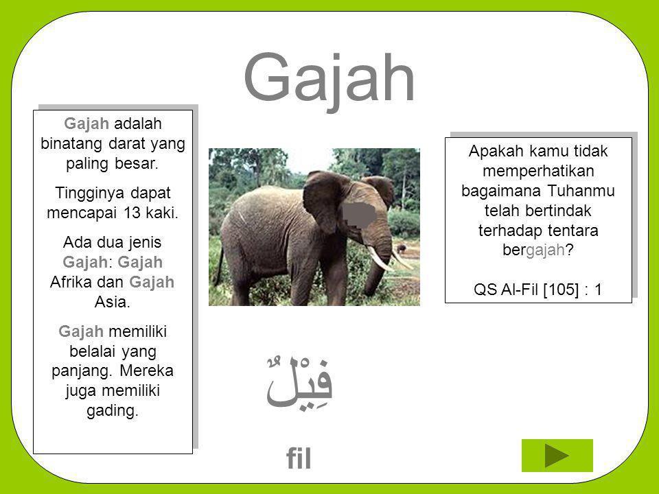 Gajah فِيْلٌ fil Gajah adalah binatang darat yang paling besar.