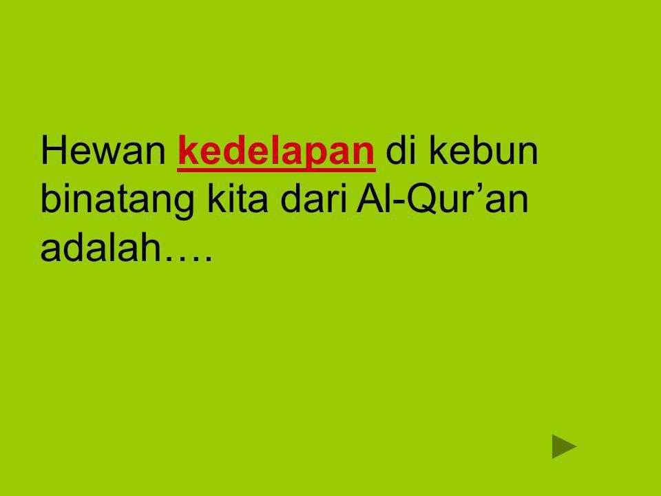Hewan kedelapan di kebun binatang kita dari Al-Qur'an adalah….