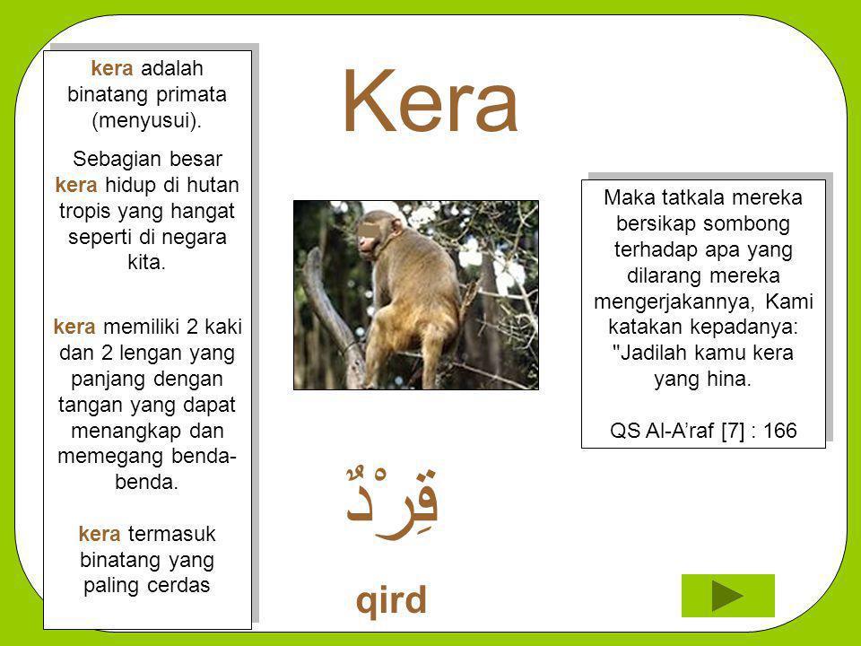 Kera قِرْدٌ qird kera adalah binatang primata (menyusui).