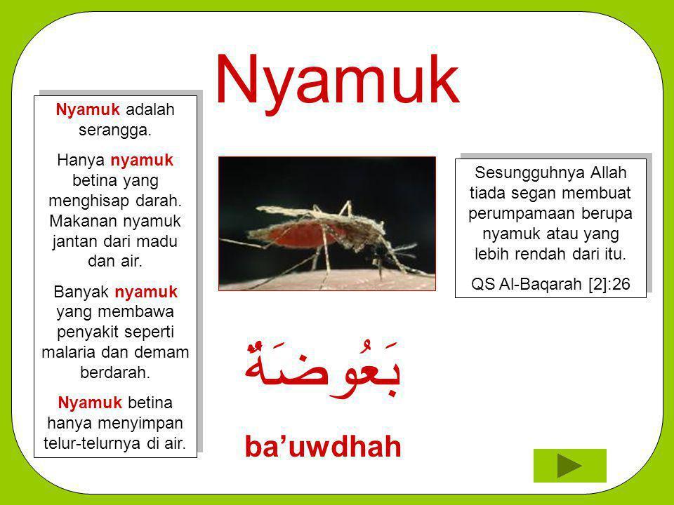 Nyamuk بَعُوضَةٌ ba'uwdhah Nyamuk adalah serangga.