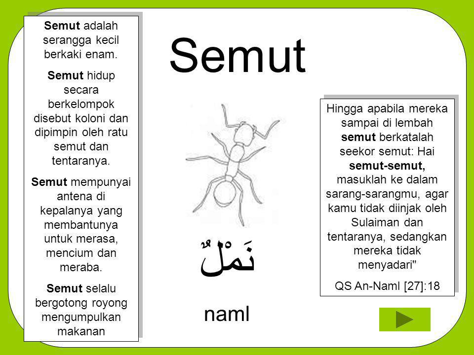 Semut نَمْلٌ naml Semut adalah serangga kecil berkaki enam.