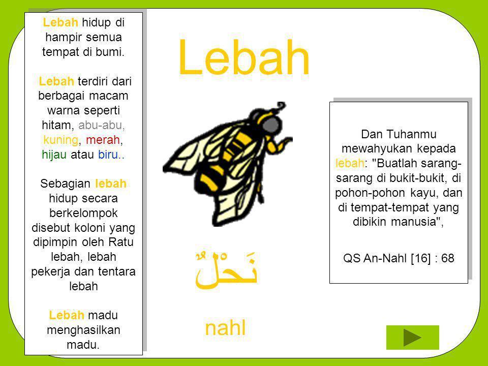 Lebah نَحْلٌ nahl Lebah hidup di hampir semua tempat di bumi.