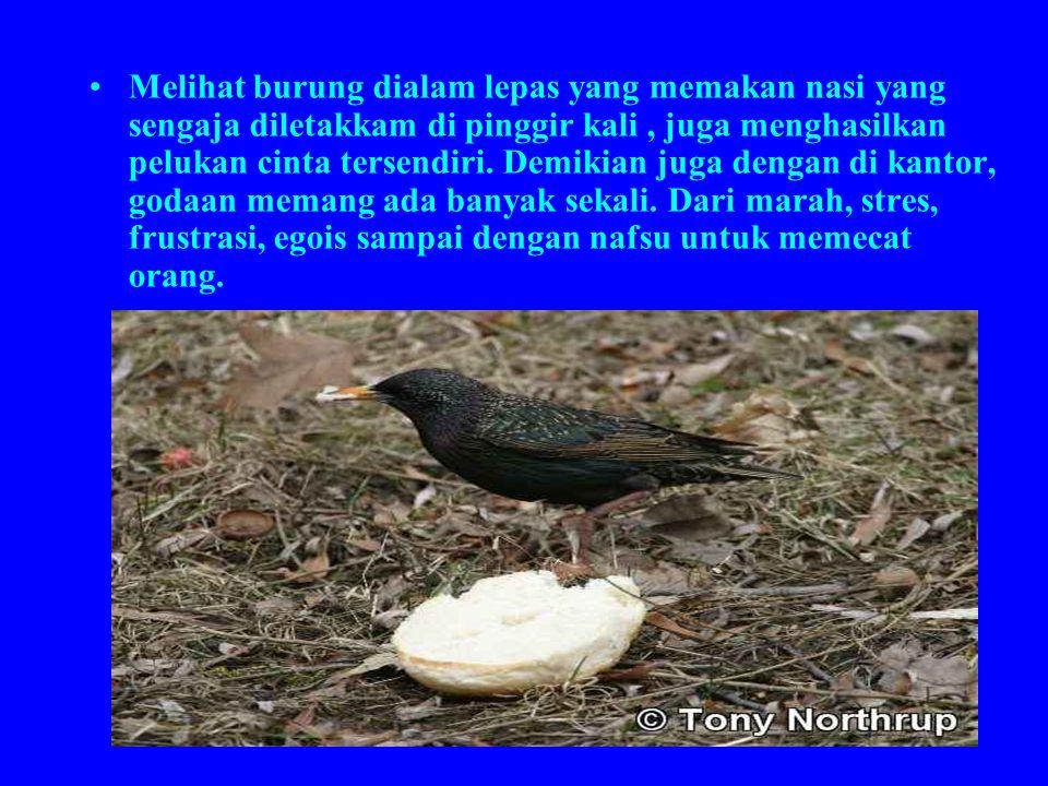 Melihat burung dialam lepas yang memakan nasi yang sengaja diletakkam di pinggir kali , juga menghasilkan pelukan cinta tersendiri.