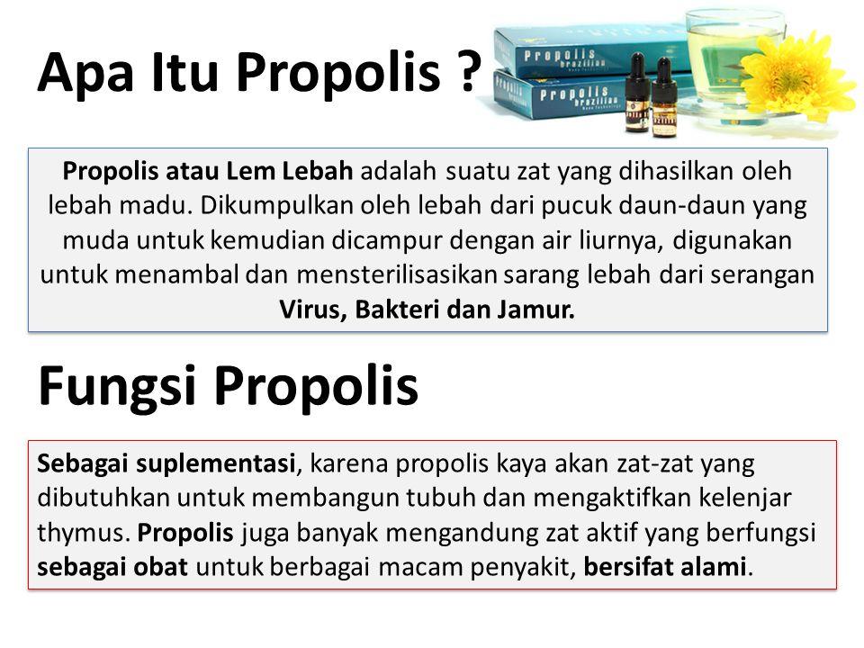 Apa Itu Propolis Fungsi Propolis