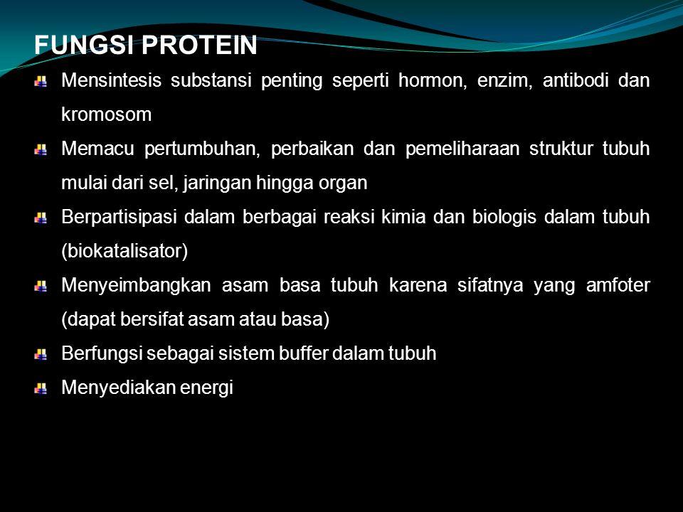 FUNGSI PROTEIN Mensintesis substansi penting seperti hormon, enzim, antibodi dan kromosom.