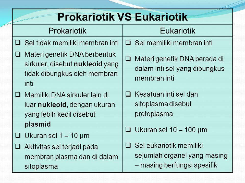 Prokariotik VS Eukariotik