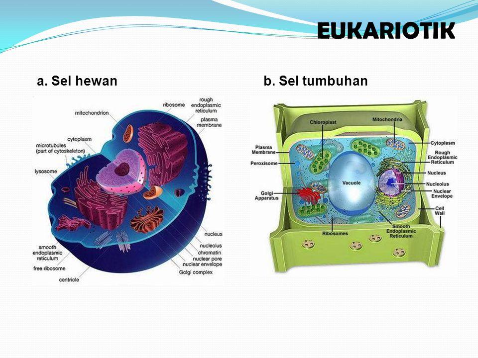 EUKARIOTIK a. Sel hewan b. Sel tumbuhan