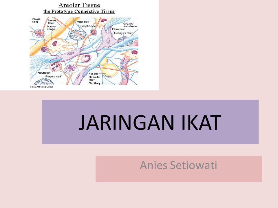 JARINGAN IKAT Anies Setiowati