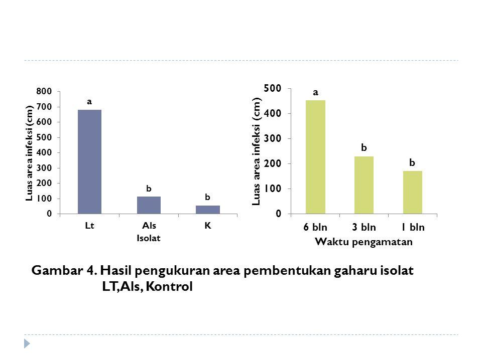 Gambar 4. Hasil pengukuran area pembentukan gaharu isolat