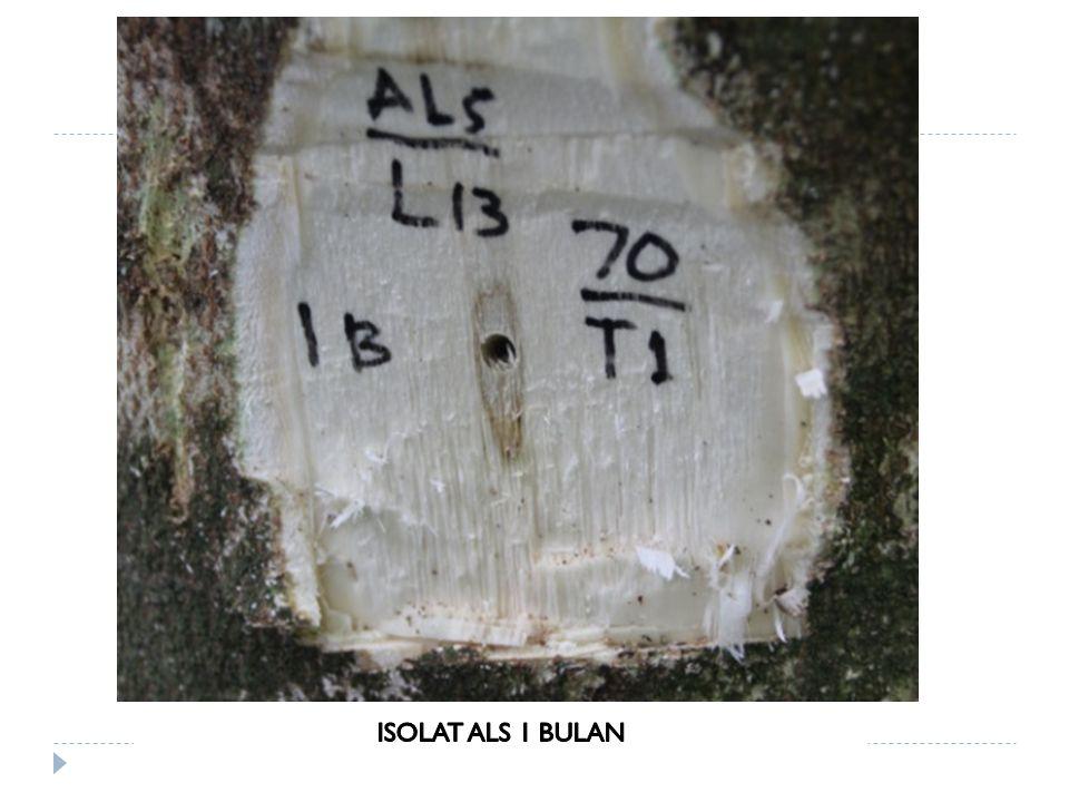 ISOLAT ALS 1 BULAN