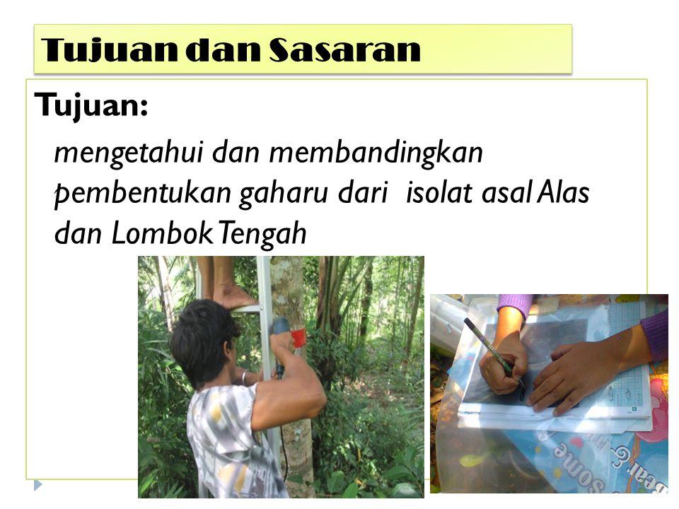 Tujuan dan Sasaran Tujuan: mengetahui dan membandingkan pembentukan gaharu dari isolat asal Alas dan Lombok Tengah