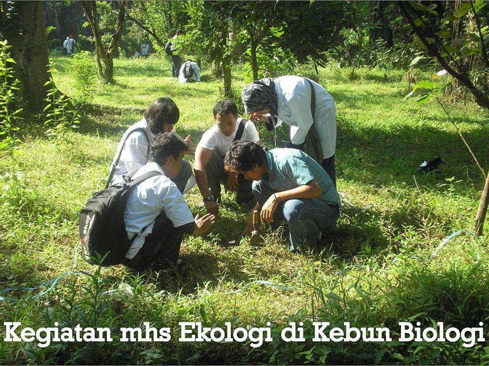 Kegiatan mhs Ekologi di Kebun Biologi