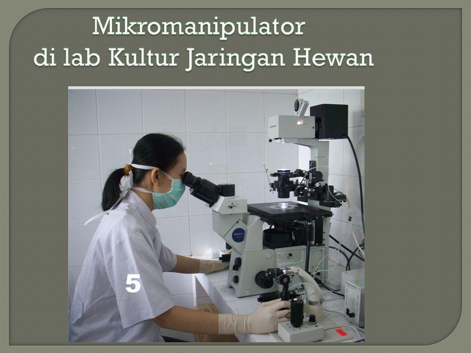 di lab Kultur Jaringan Hewan