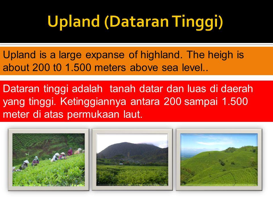 Upland (Dataran Tinggi)