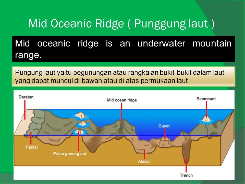 Mid Oceanic Ridge ( Punggung laut )