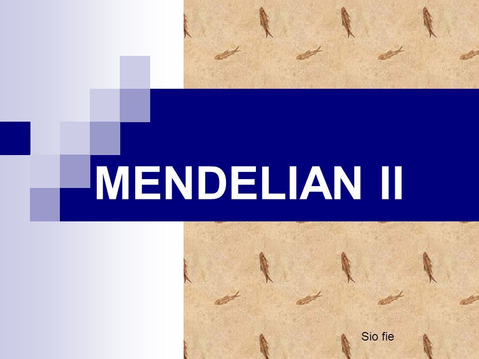 MENDELIAN II Sio fie