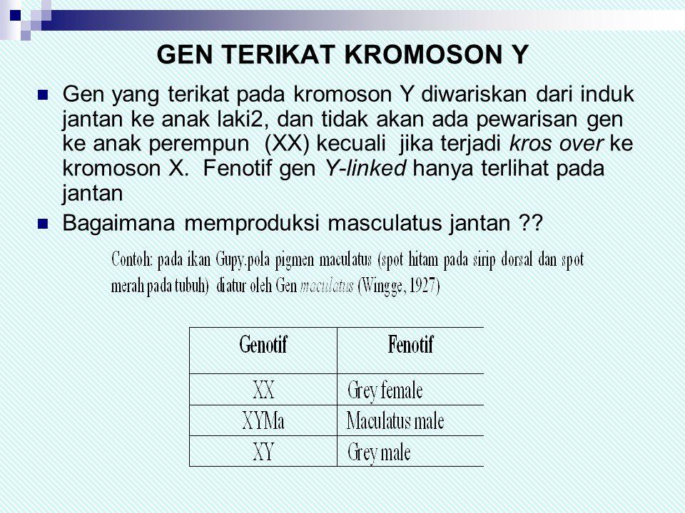GEN TERIKAT KROMOSON Y