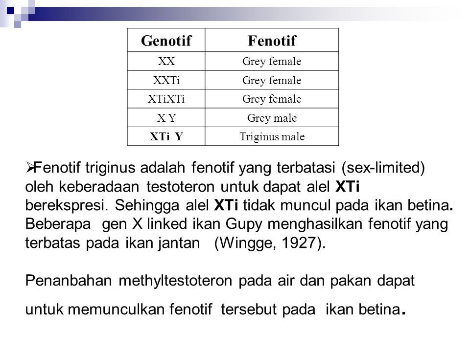 Genotif Fenotif. XX. Grey female. XXTi. XTiXTi. X Y. Grey male. XTi Y. Triginus male.