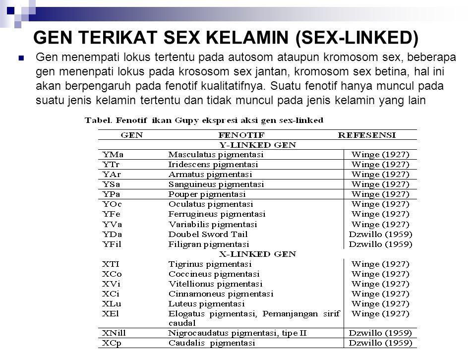 GEN TERIKAT SEX KELAMIN (SEX-LINKED)